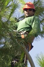 Juan Avalos, Climber, Asplundh Tree Expert