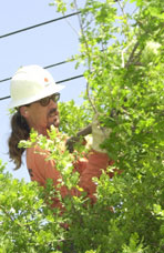 Keith Jackson, Tree Trimmer, Sacramento Municipal Utility District