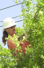 Keith Jackson, Tree Trimmer, Sacramento Municipal Utility District