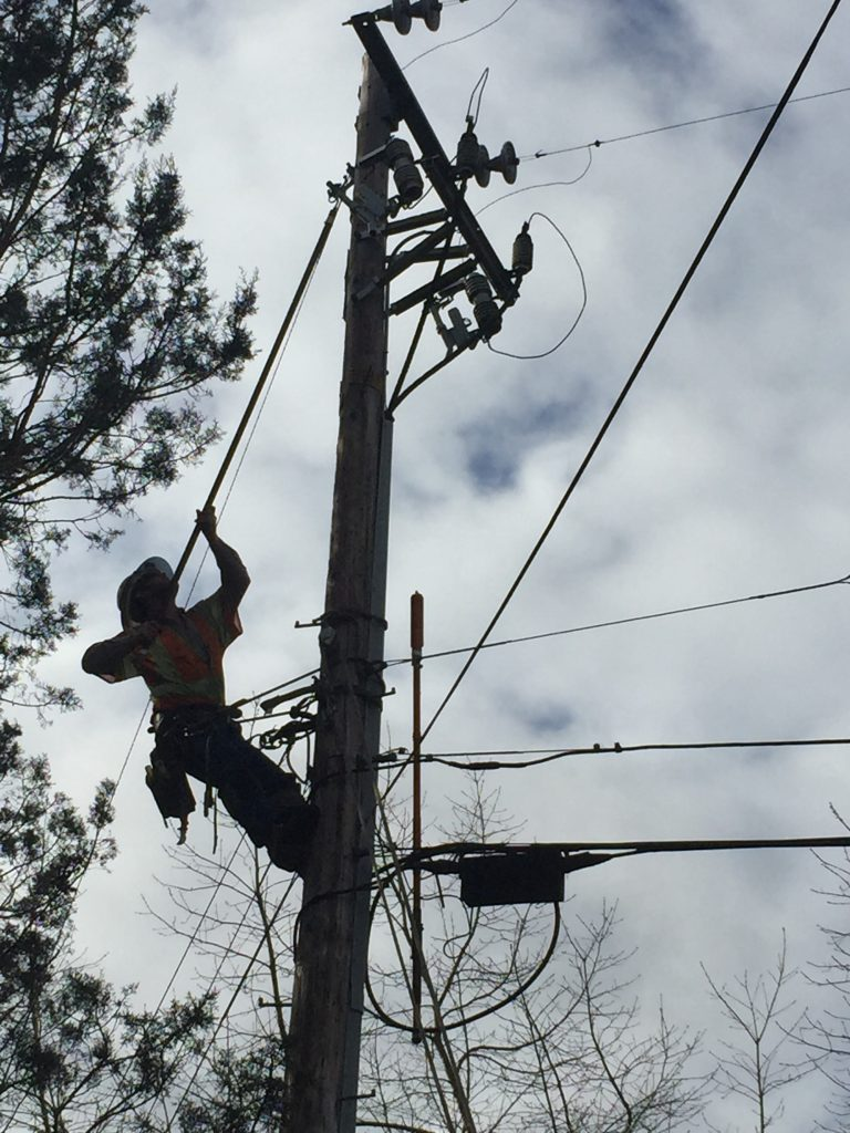 Healdsburg Lineman Brent Sullivan energizing a single phase tap line, After a tree trimmer crew from Davey Tree removed a fallen tree and the crew repaired the conductors