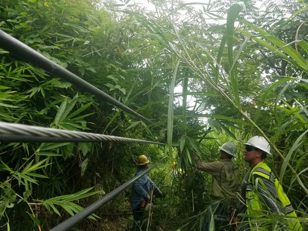 Cayleb Bowman's crew finding the wire in the jungle